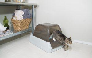 liti re comment bien choisir la liti re de son chat. Black Bedroom Furniture Sets. Home Design Ideas