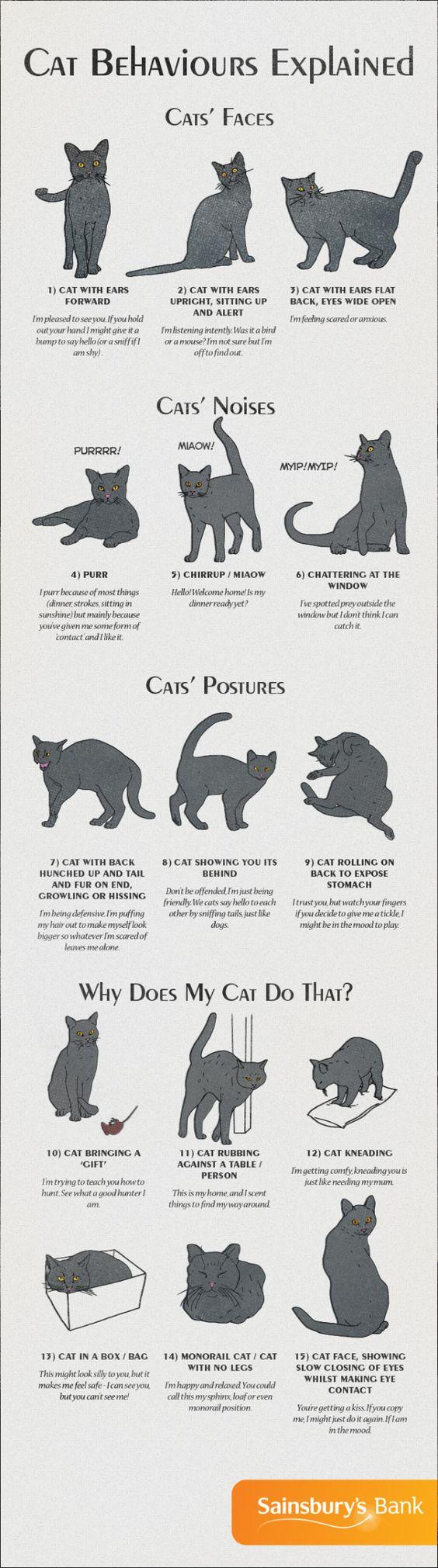 Comprendre le langage de votre chat : oreilles, bruits, comportement