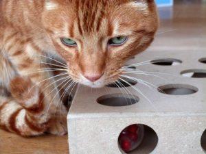 Boite de jouets pour chat interactive