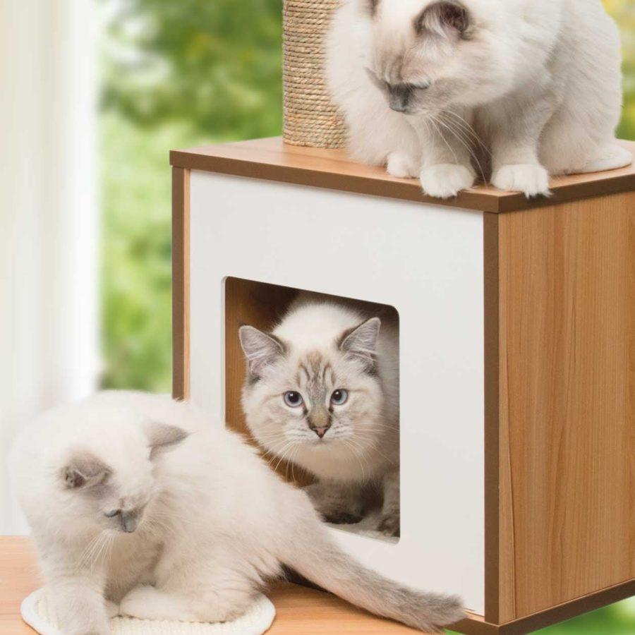 un arbre chat vesper pour notre maine coon notre avis. Black Bedroom Furniture Sets. Home Design Ideas