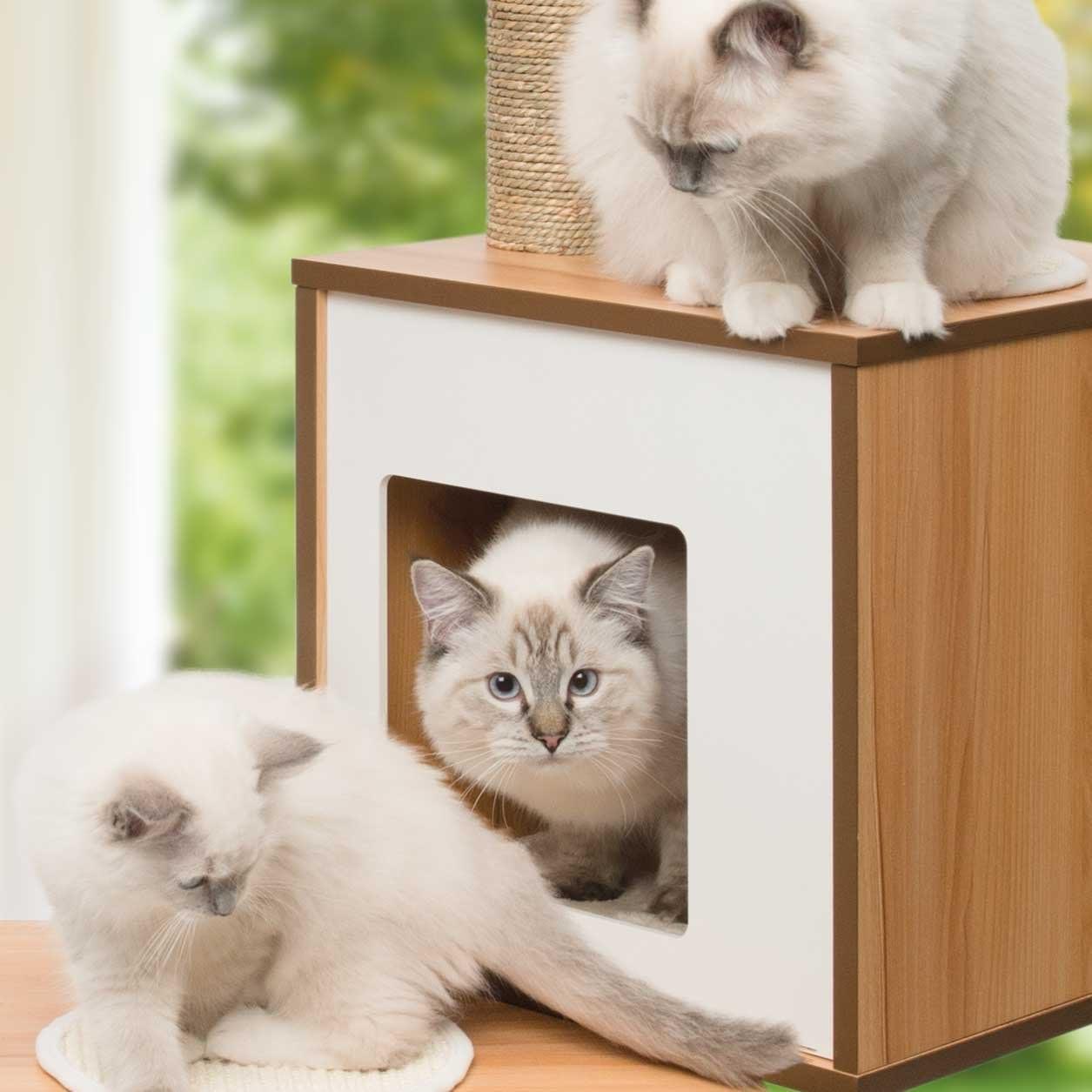 Arbre à chat moyen avec panier et jeu Vesper, bois de noyer et blanc